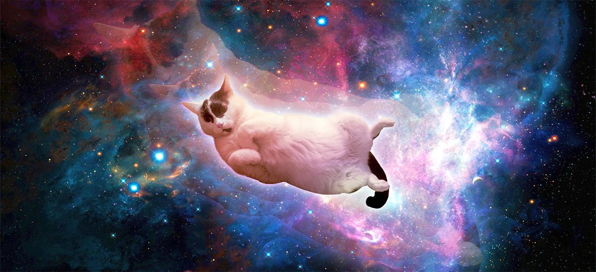 gatocosmico.jpg